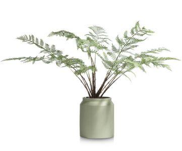 plant Fern in plastic pot